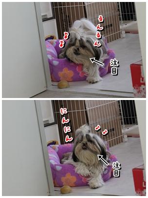 cats2009-11-16-11.jpg
