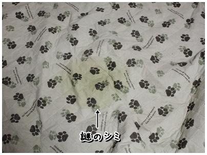 cats2009-11-17-02.jpg