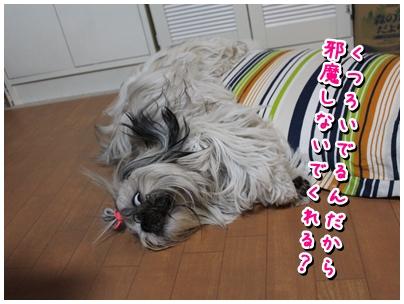 cats2009-11-18-04.jpg