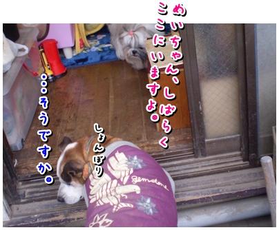 cats2009-11-21-04.jpg