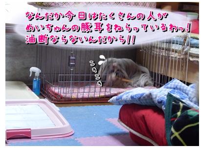 cats2009-11-30-01.jpg