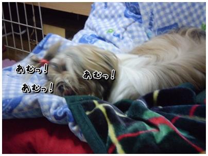 cats2009-11-30-05.jpg