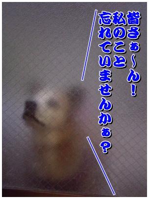 cats2009-12-01-01.jpg