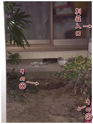 cats2009-12-02-02.jpg