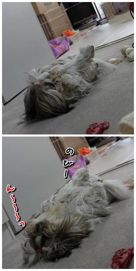 cats2009-12-04-03.jpg