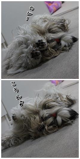 cats2009-12-04-04.jpg