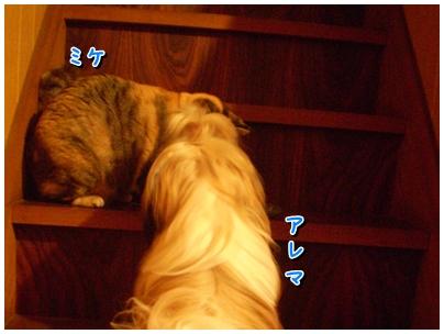 cats2009-12-05-01.jpg