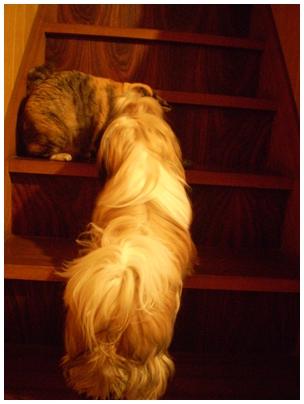 cats2009-12-05-02.jpg