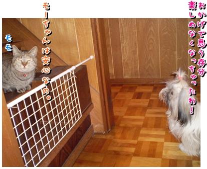 cats2009-12-05-04.jpg