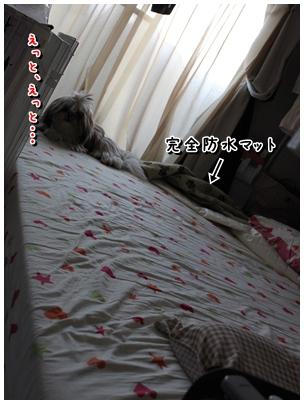 cats2009-12-18-01.jpg