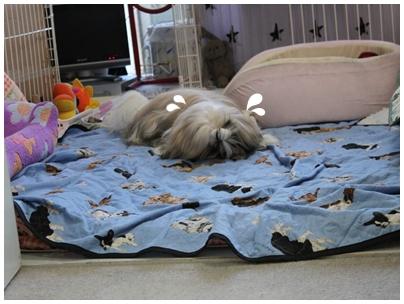 cats2009-12-19-06.jpg