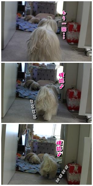 cats2009-12-19-09.jpg