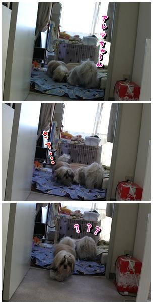 cats2009-12-19-10.jpg
