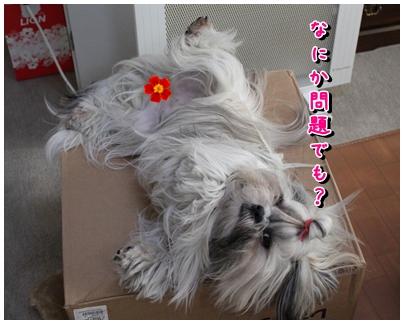cats2009-12-23-02.jpg