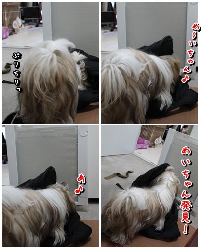 cats2009-12-24-03.jpg