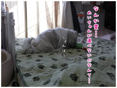 cats2009-12-30-08.jpg