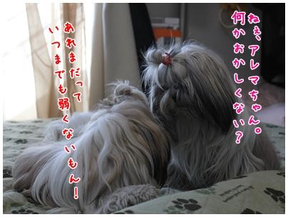 cats2009-12-30-11.jpg