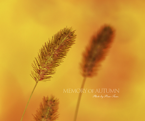 MEMORY OF AUTUMN
