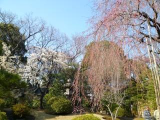 浅草寺庭3