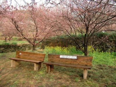 雪割桜ベンチ