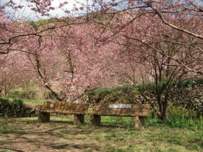 桜とベンチ0302