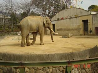 王子動物園③