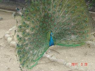 王子動物園④
