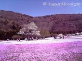 富士芝桜まつり02