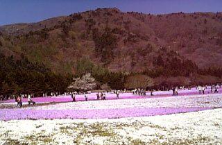 富士芝桜まつり05