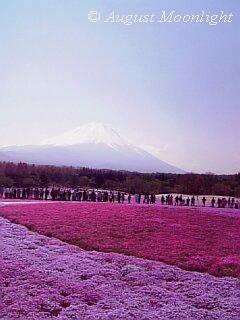 富士芝桜まつり06