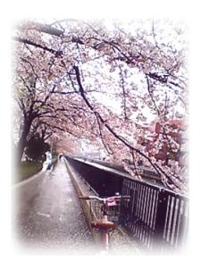 yokohamasakura2006