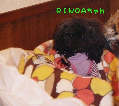RINOAちゃん