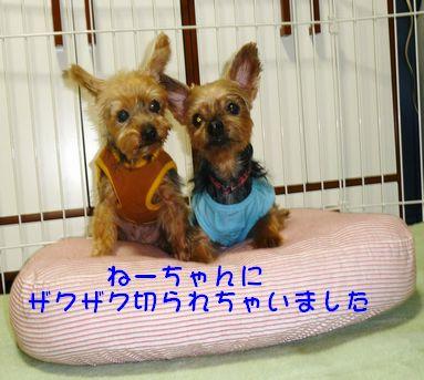 シニア犬カット1