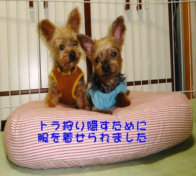 シニア犬カット2