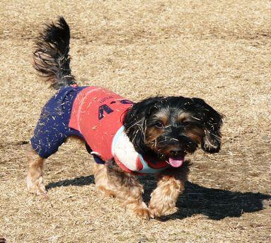芝まみれ犬3