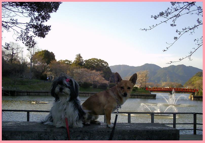 甘木公園 2