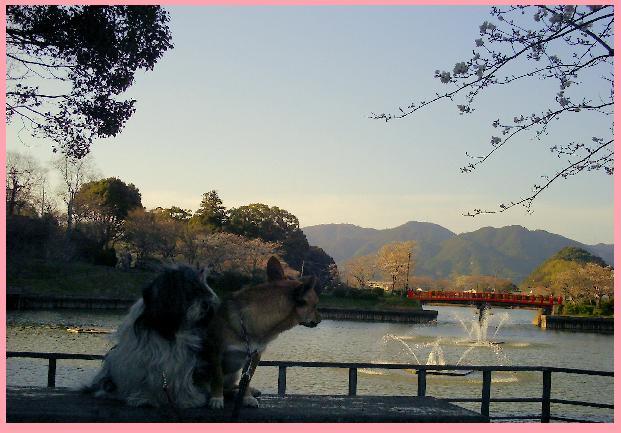 甘木公園 1