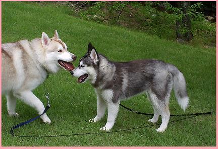 サラ&レナちゃん
