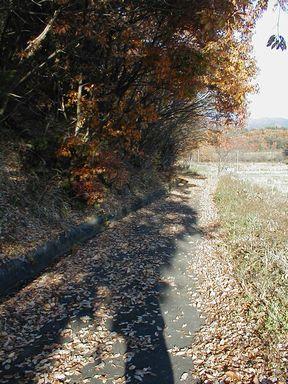 落ち葉の小路