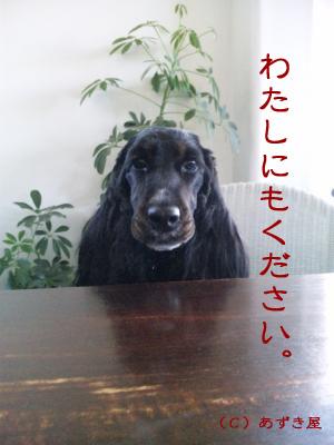 azuki381.jpg
