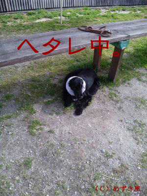 azuki386.jpg