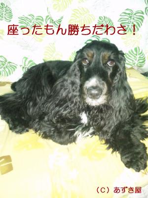 azuki406.jpg