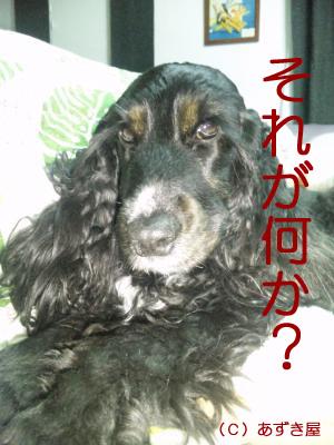 azuki407.jpg