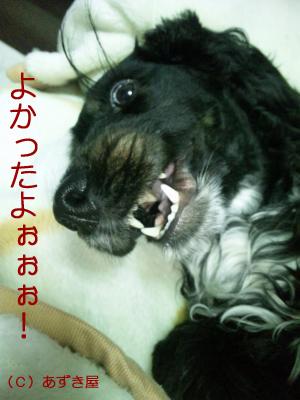 azuki408.jpg