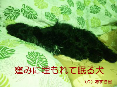 azuki419.jpg