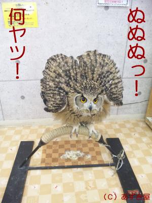 azuki438.jpg