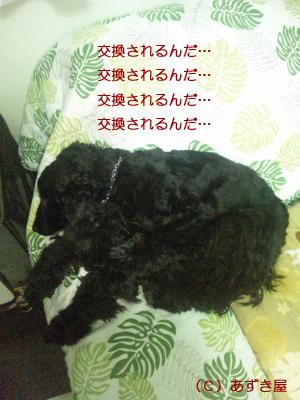 azuki453.jpg