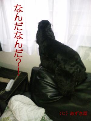 azuki460.jpg