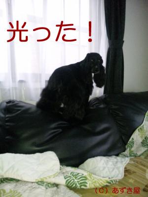 azuki461.jpg