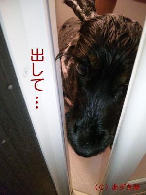 azuki474.jpg